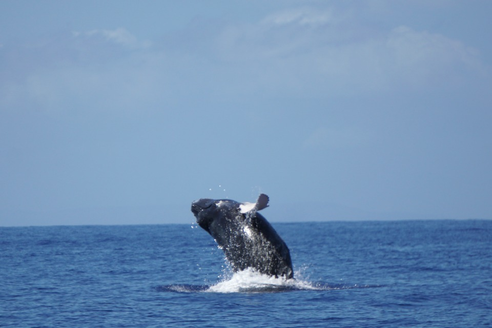 whales 13