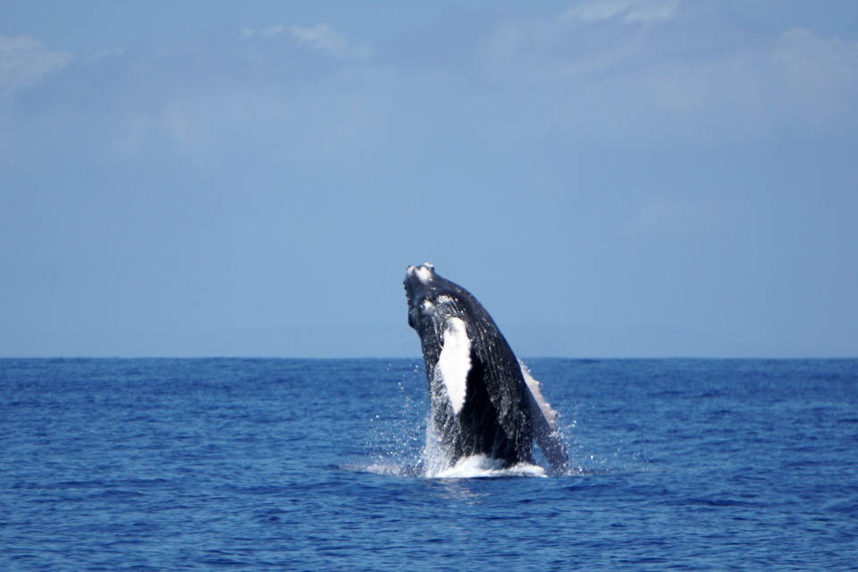 whales 14