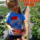 The Berry Best SoCal U-Pick Strawberry Farms