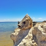 Exploring the Bombay Beach Ruins at the Salton Sea