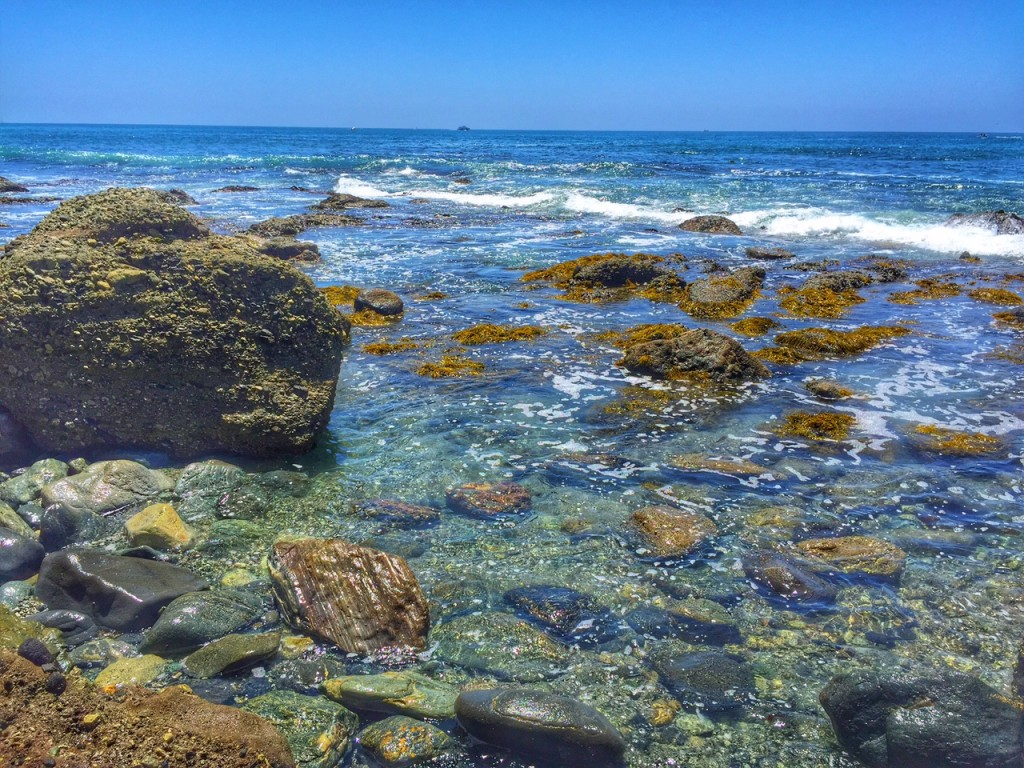 Exploring the Dana Point Tidepools