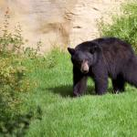 OC Zoo Welcomes New Bear Elinor