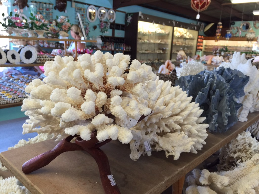 Collection of Rare Coral at The Shell Shop