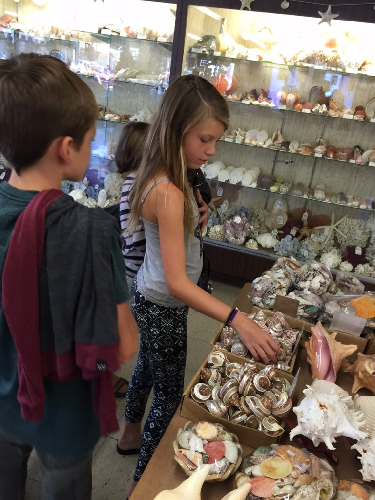 Children looking at shell collection