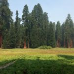 Fit for a King: Spending Time with the Sequoias in Central California's Kings Canyon National Park