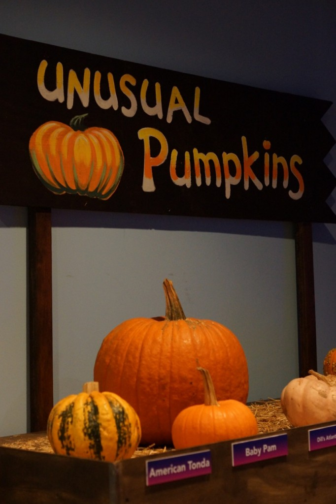Fun pumpkins with different textures at Discovery Cube OC #DiscoveryCubeMoms