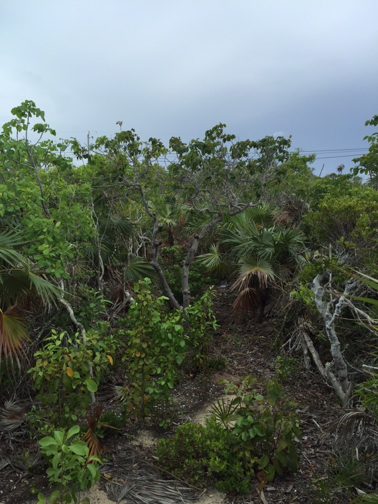Tropical landscape of the Turks and Caicos