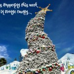 Events Happening This Week in Orange County: December 14th – 18th