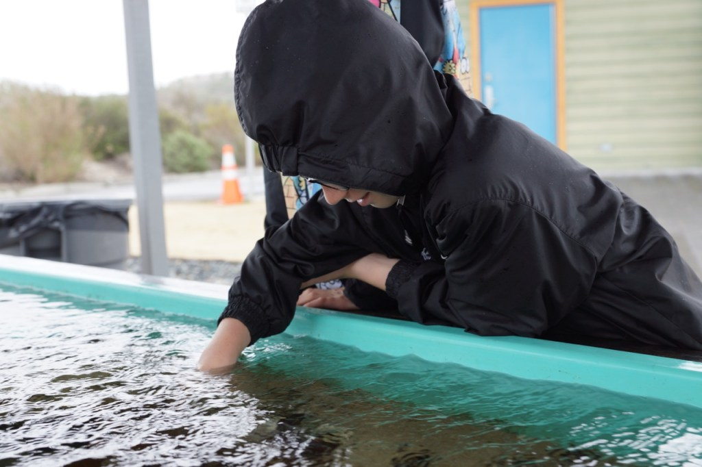 touching animals in the tidepool tank