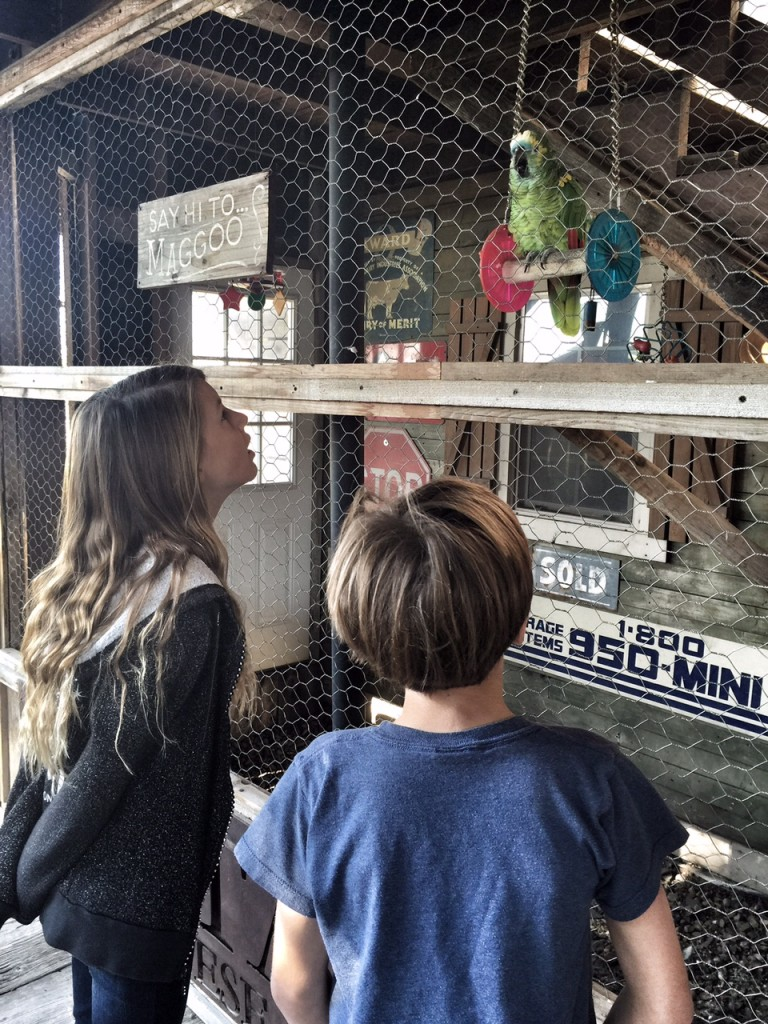 Kids talking to a parrot