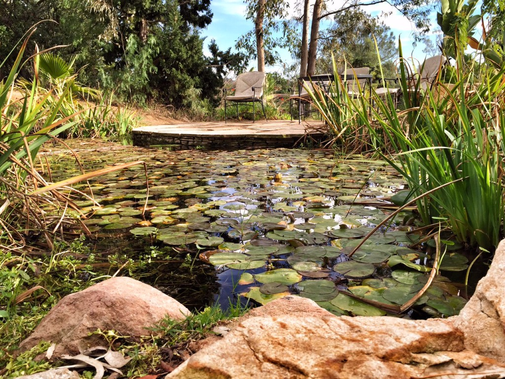Meadow frog pond