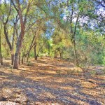 Wilderness Glen Park Nature Trail in Mission Viejo