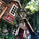 The World's Largest Treehouse at Bravo Farms