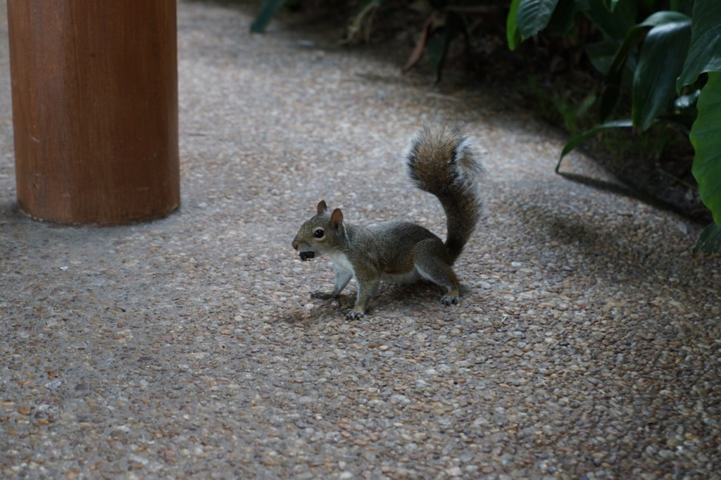 disney squirel at animal kingdom