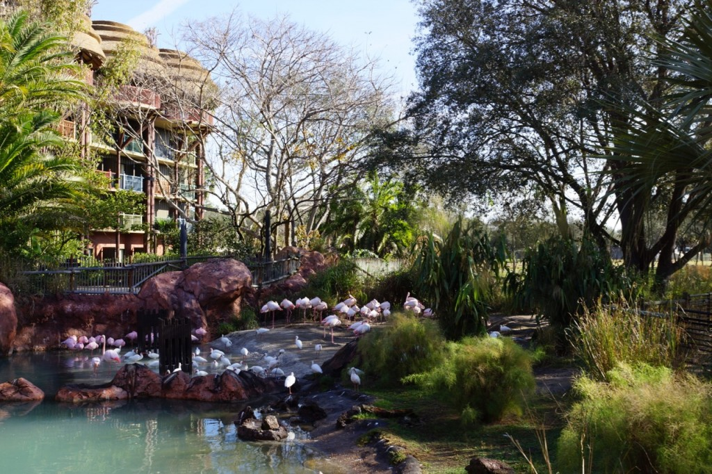 landscaping at animal kingdom