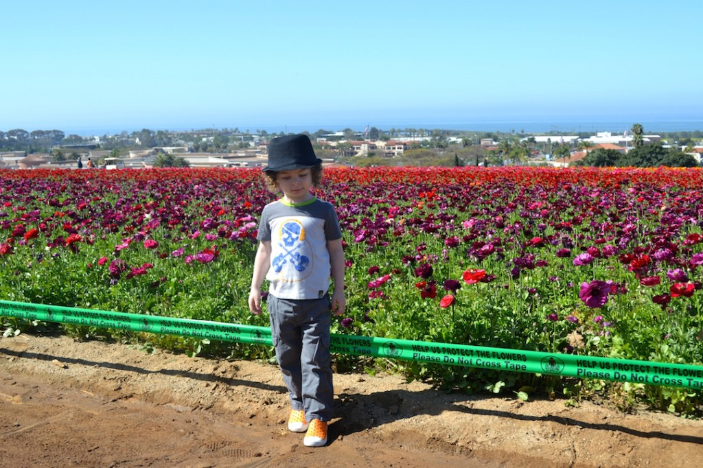 cute kid at the flower fields