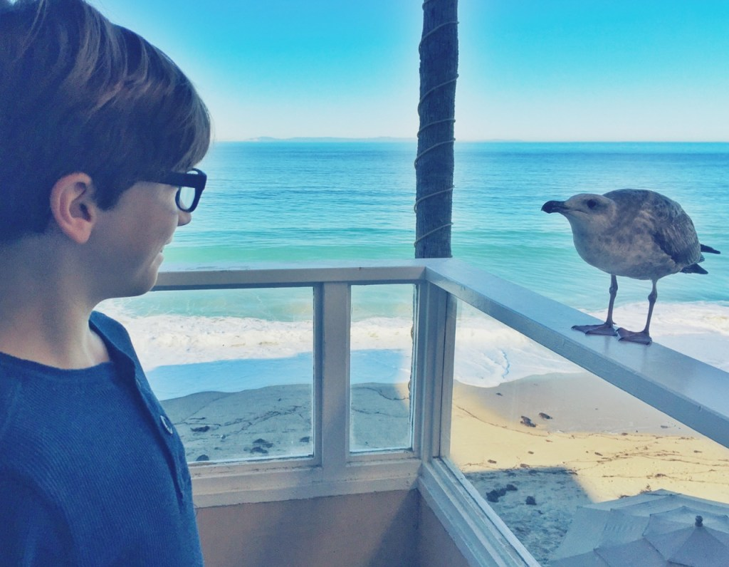 kids playing with birds in laguna