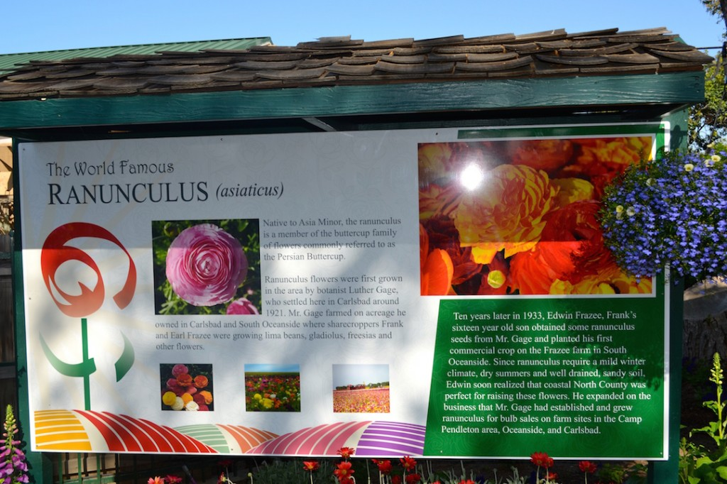 sign at the flower fields