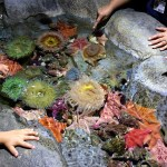 Horses, Dragons and Vanishing Animals at the Aquarium of the Pacific