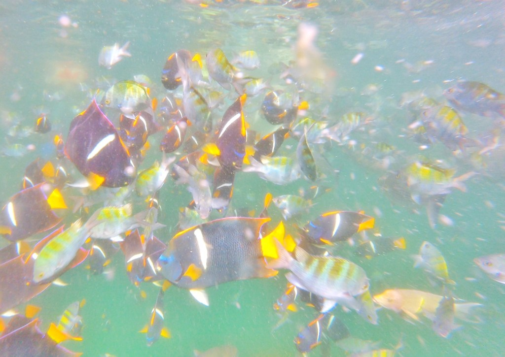 Lots of fish in Mexico