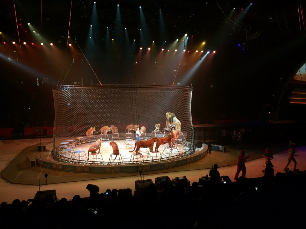 Tigers at Ringling Bros