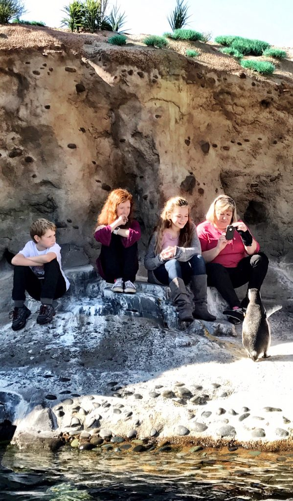 Children enjoying the Aquarium of the Pacific Penguin encounter