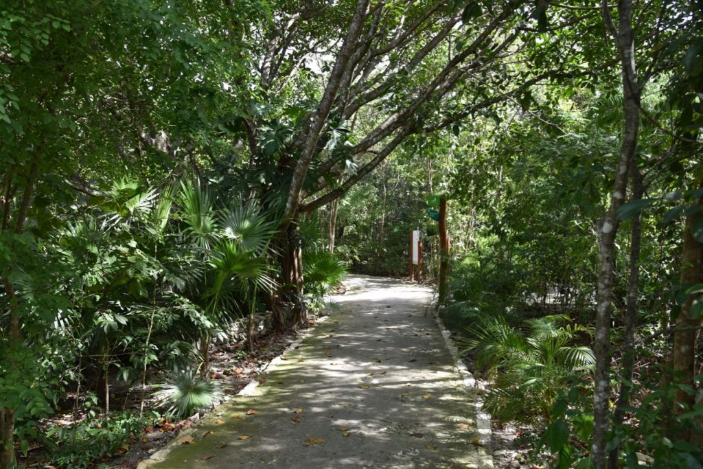 Path leading to Cenote Burrodromo in Mayakoba