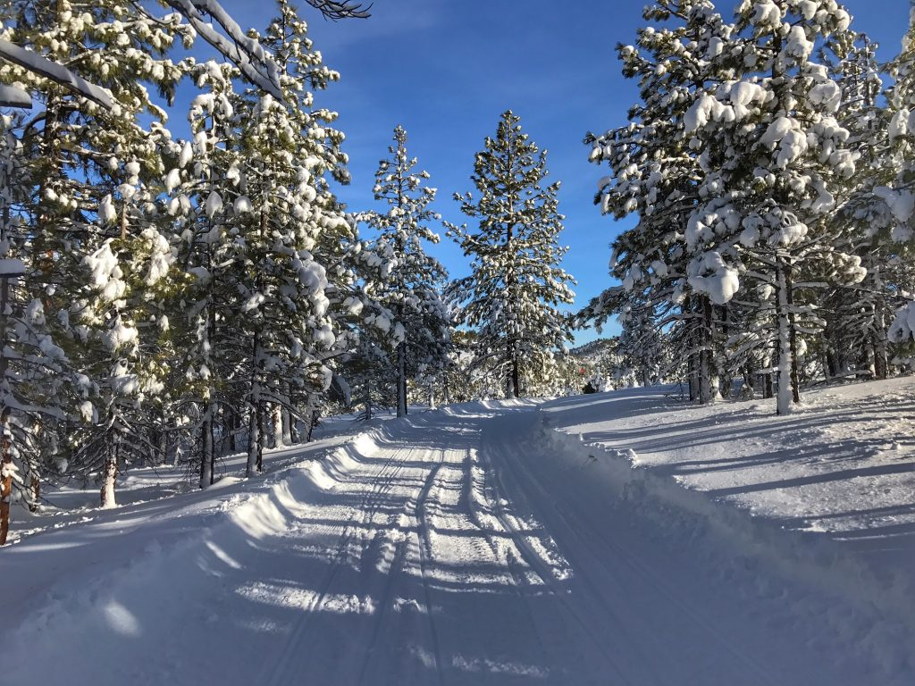 Best Places to take families Snowmobile Riding