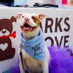 Barks of Love 'Bark Bash' Family Festival