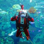Celebrate the Holidays at The Aquarium of the Pacific + Giveaway