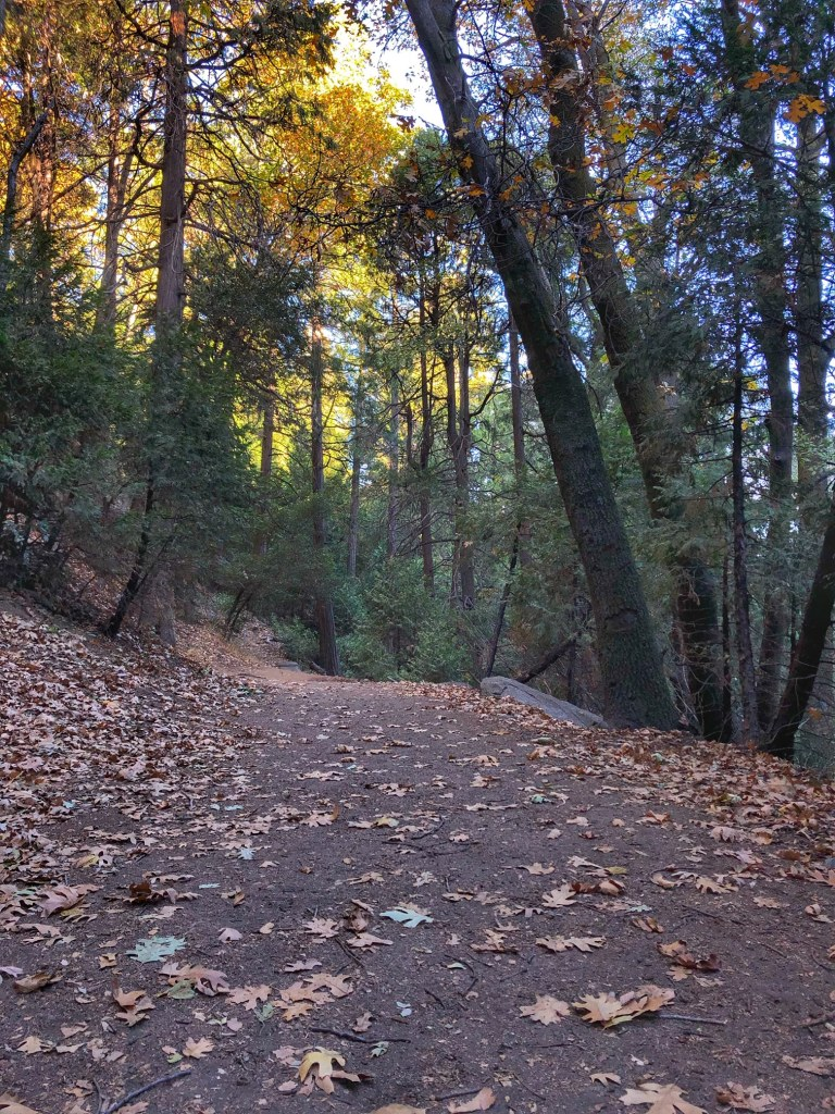Best hiking trail in Crestline California