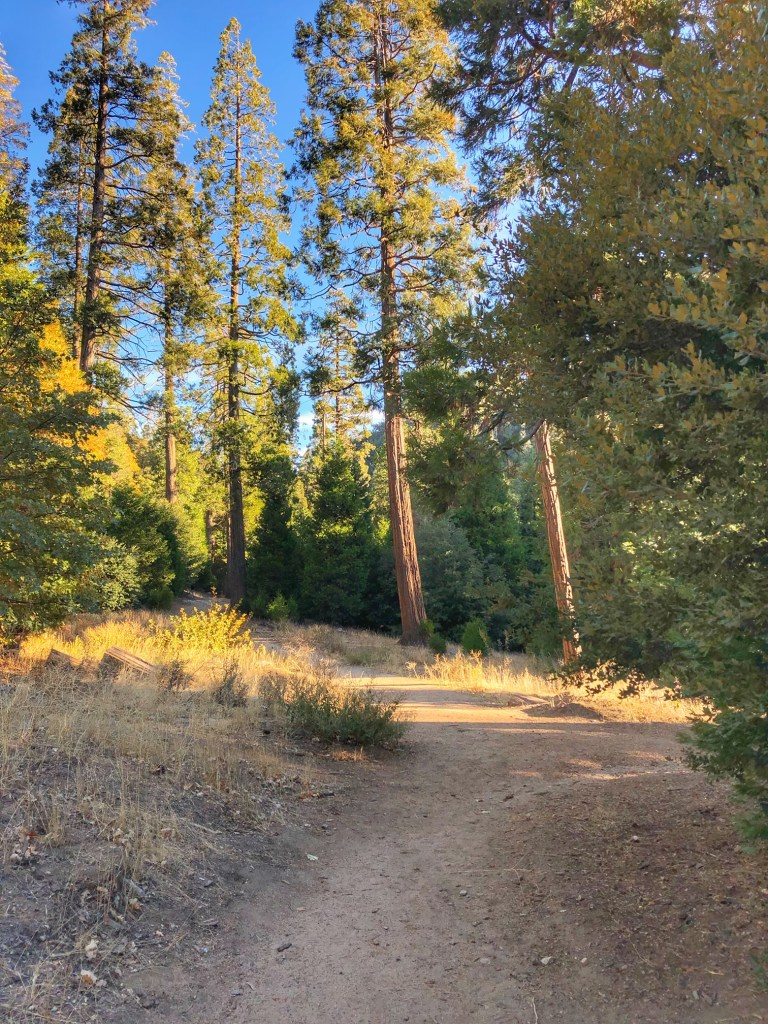 Best hiking trail for families in Lake Arrowhead