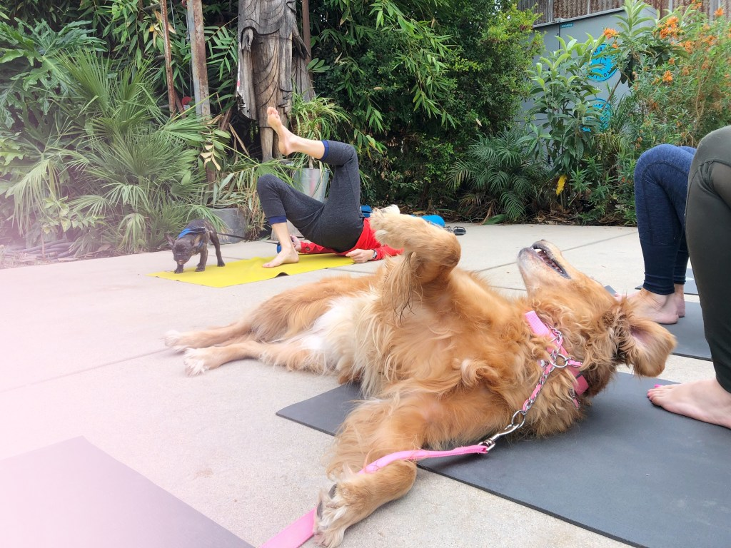 Doggy yoga at Caravan outpost in Ojai