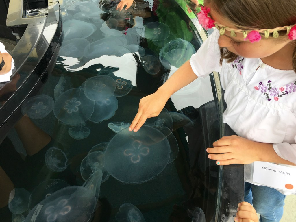 Touching jelly fish at the Aquarium of the Pacific