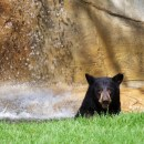 Bear Awareness Day at the OC Zoo