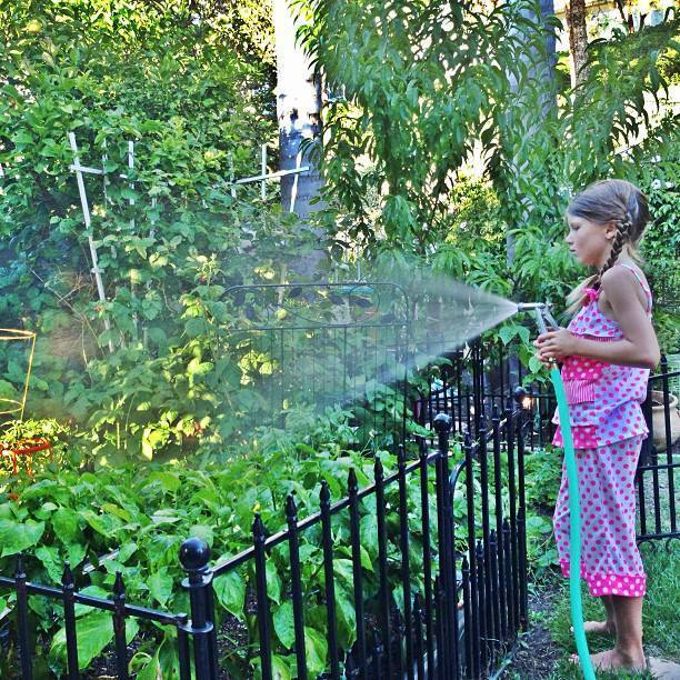 Growing Vegetables in a backyard garden