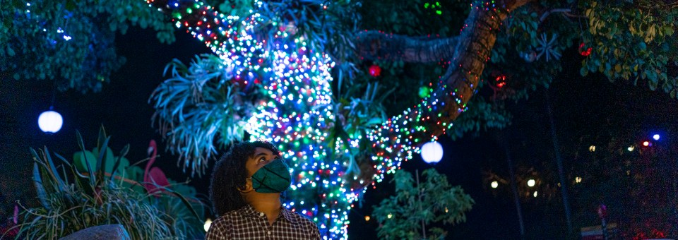 Jungle Bells Festivities Return to the San Diego Zoo