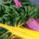 Bacon and Garlic Rainbow Swiss Chard Recipe
