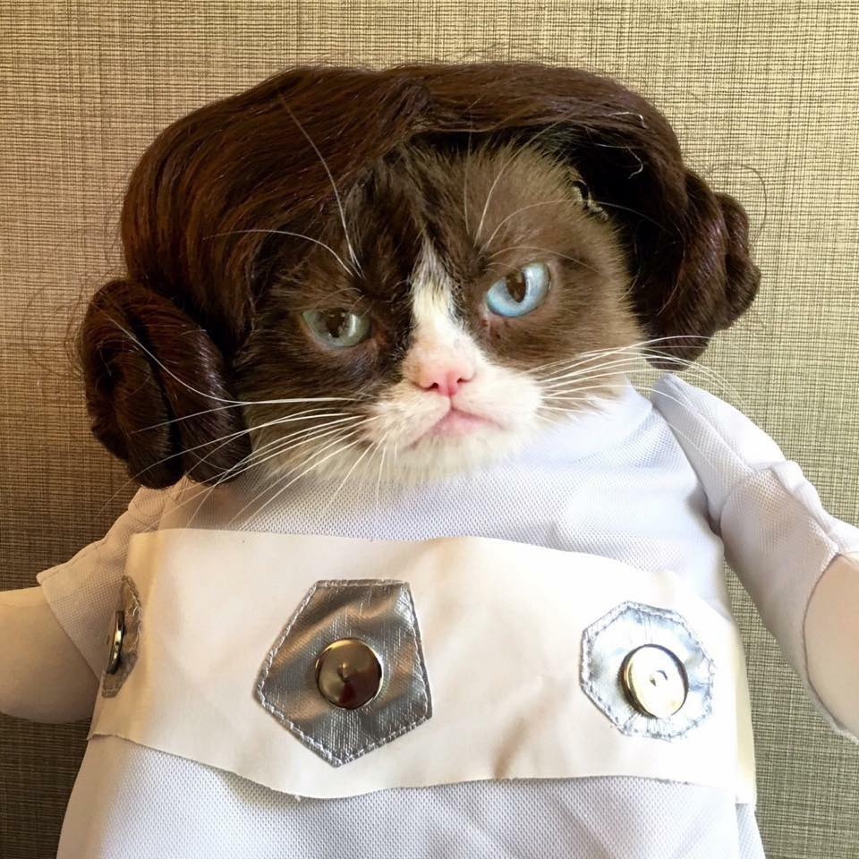 Grumpy Cat as Princess Leia