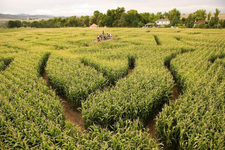 corn maze chatfield