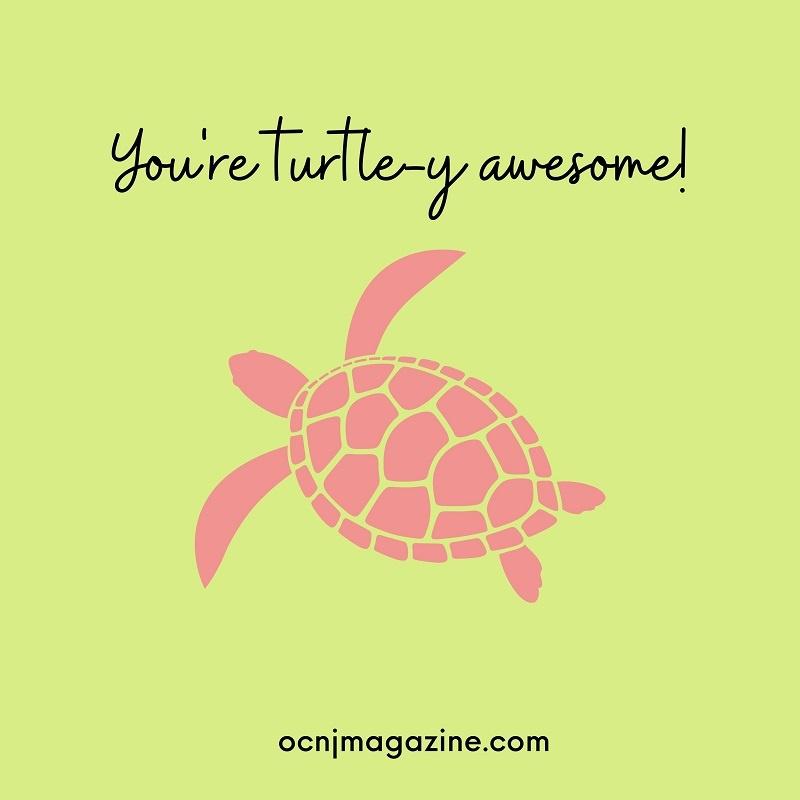 Valentine card turtle