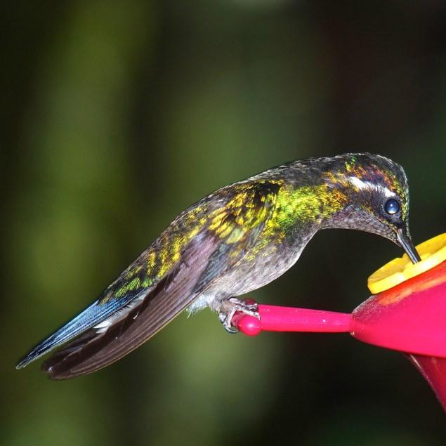 Hundreds of hummingbirds