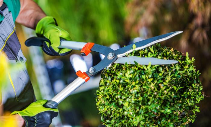 Justiça obriga INSS a pagar auxílio a jardineiro que sofreu acidente de trabalho