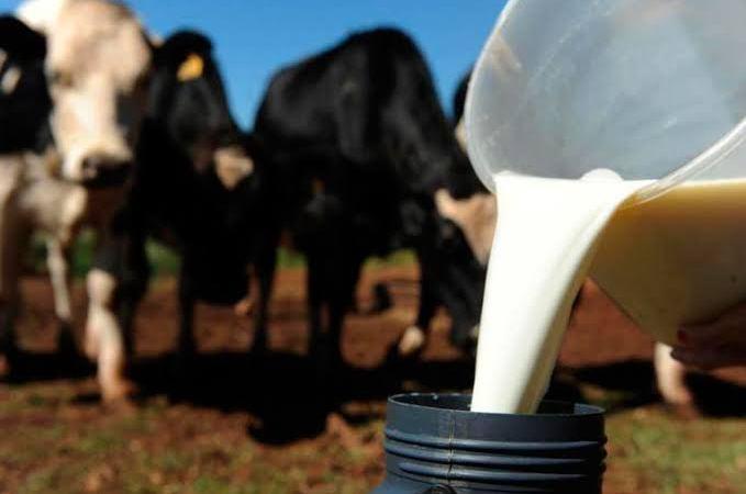 Pequenos produtores reivindicam melhoria no preço do litro de leite