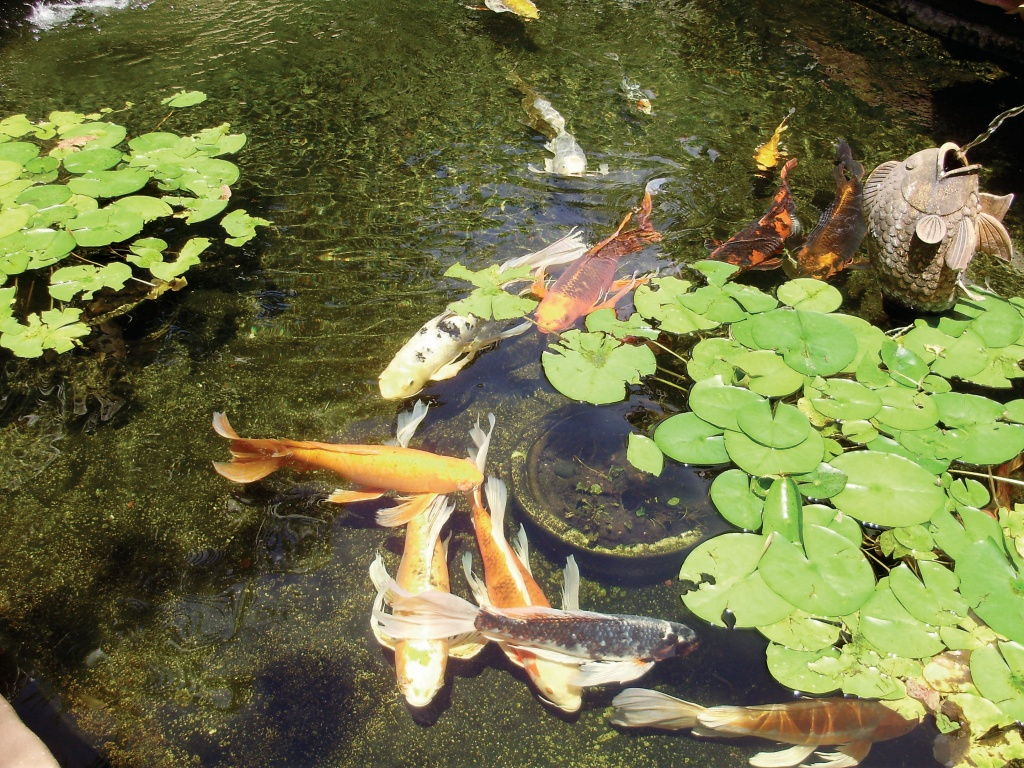 Sun Shade Fish Pond