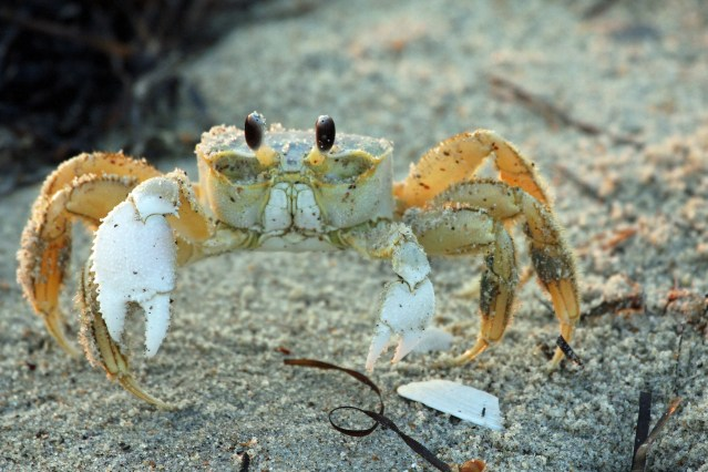 GhostCrab_PS IMG_6958[1]