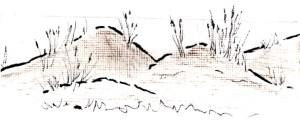 Pat Garber dune grass