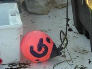 Morty Gaskill buoy PS 2014-11-04 08.14