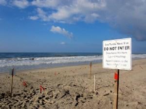 Sea turtle next closure sign.