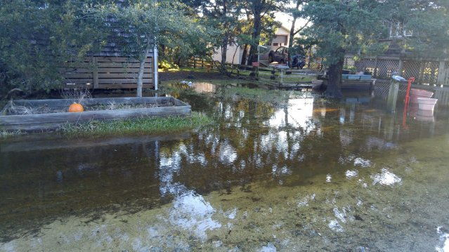Flood subsiding in Widgeon Woods Monday morning at dawn. Photo by P. Vankevich